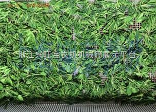 供应志雅ZY-30HM多功能金银花微波杀青机