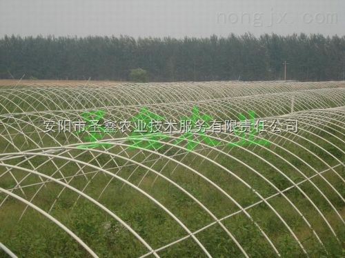 蔬菜大棚骨架 温室蔬菜大棚建设 圣鑫农业
