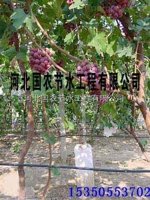 通用型河北国农葡萄滴灌管滴灌带