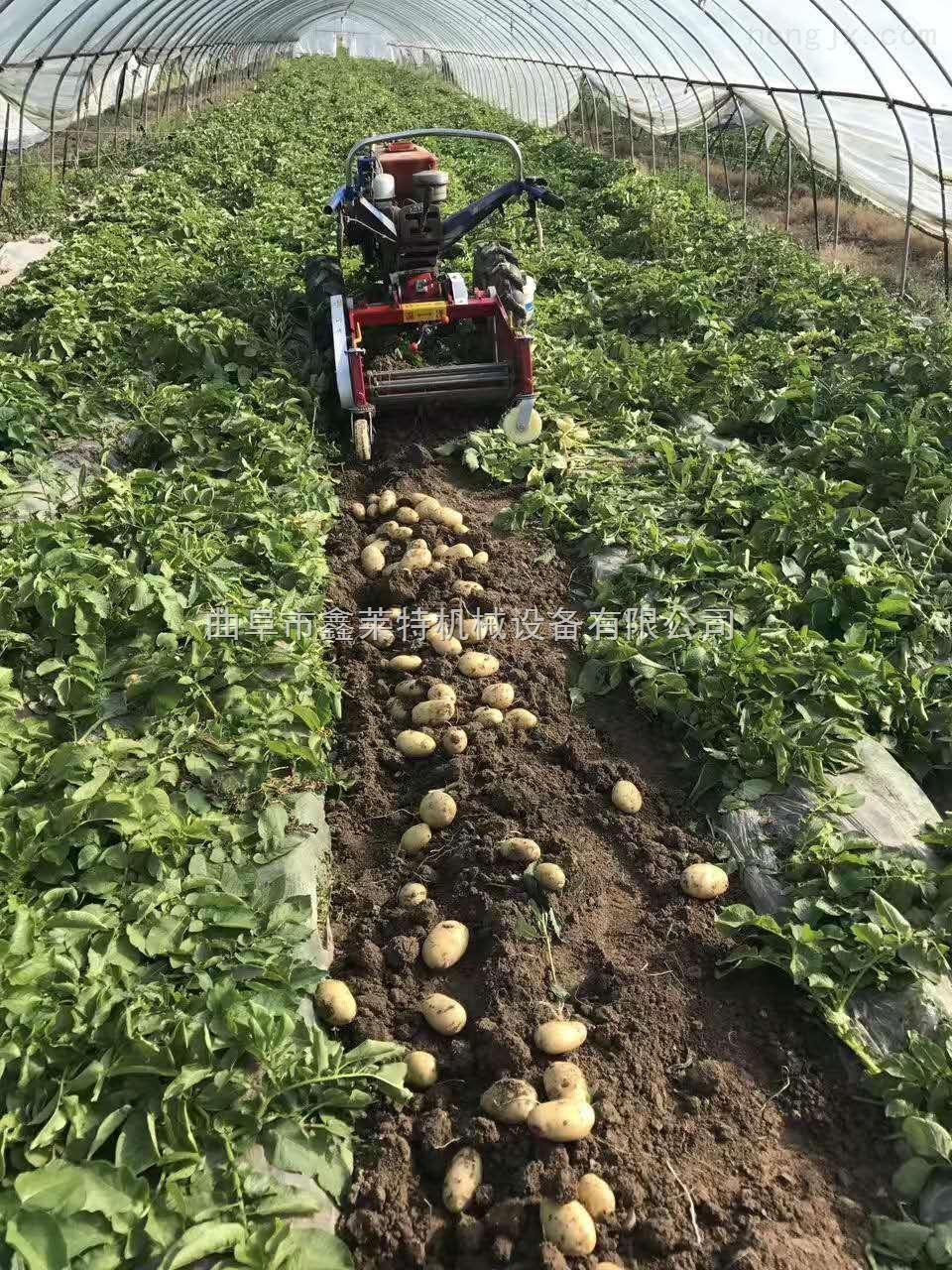 手扶薯类杀秧机 棉花秸秆还田机 秸秆回收机 玉米秸秆切碎机 干净无残留
