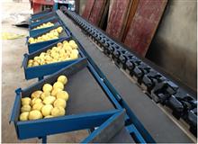 xgj-szz柠檬选果机自动重量分级分选机柠檬筛选选果机 热销国内外