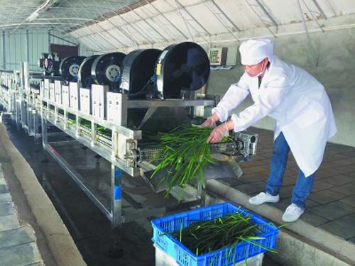 韩国进口韭菜收割机_韭菜根收割机图片_韭菜根收割机图片大全_韭