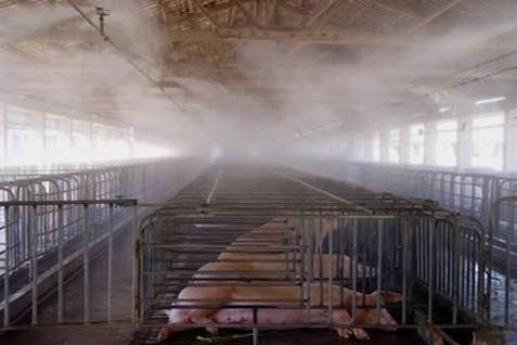 妊娠母猪猪舍喷雾降温设备|肉猪生长育肥猪猪舍自动喷雾设备